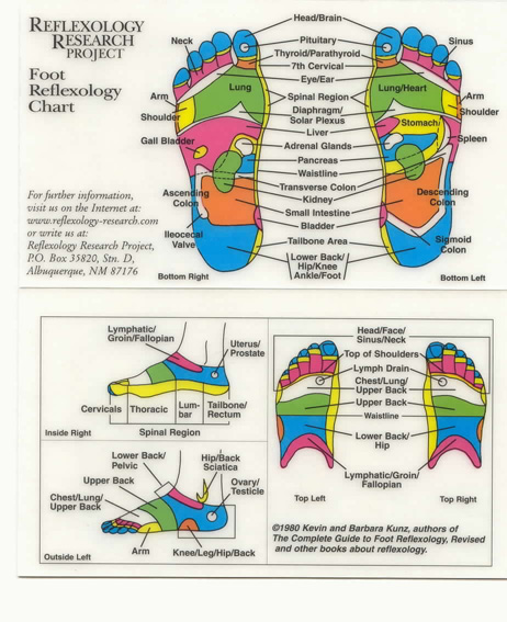 history of reflexology Do you want to find about the history of reflexology call beneficial touch on  07790 160 631 our reflexologists will provide all the information you need.