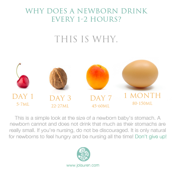 Why does a newborn drink every 1-2 hours