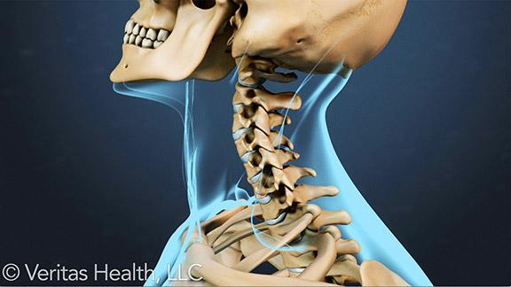 cervical-spine-range-motion